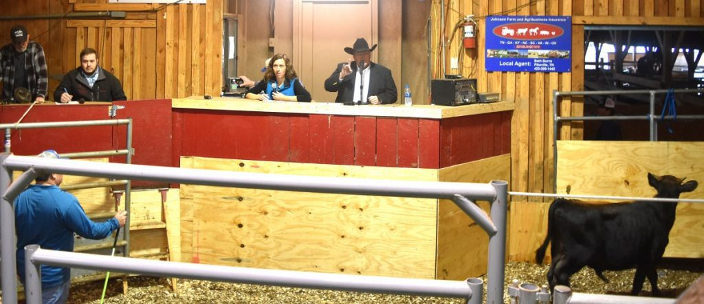 Auctioneer contest